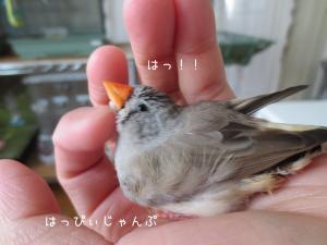 IMG_4372_convert_20130524024824.jpg