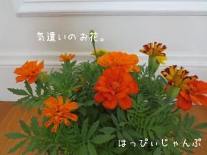 IMG_6139_convert_20130611103537.jpg