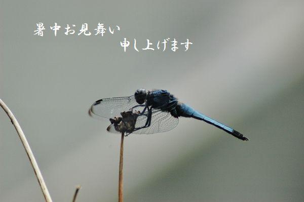 044 - コピー (600x399)