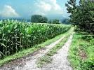 田舎風景2