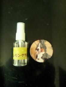 もなのブログ-DSC_0321.JPG
