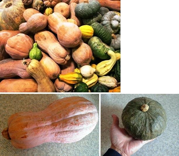CIMG7304-2014伊の野菜①