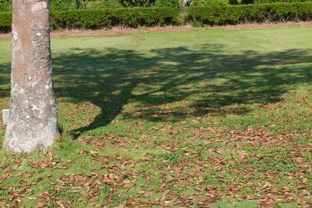 大木の陰絵