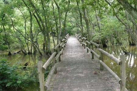 渡り終える木橋
