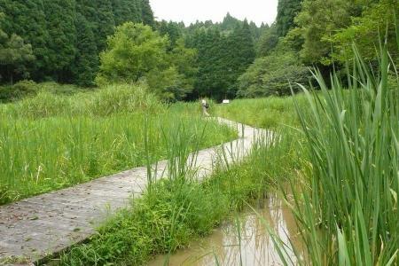 湿地帯のような♪