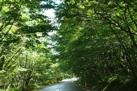 下山途中のトトロの森♪