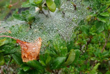 クモの宝物の真珠