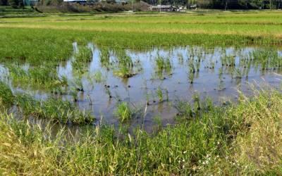 2013_10 17_taifuu 26go-tanbo 2