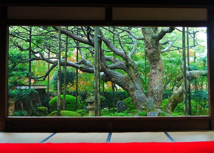 kiyomizu-housenninn-1311-220b.jpg