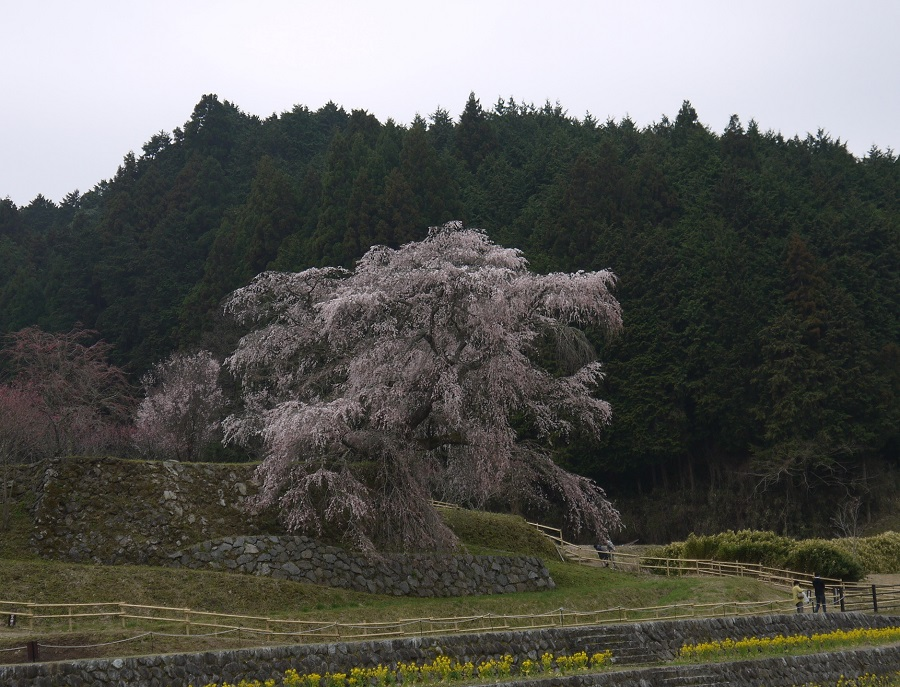 matabe-maesimasyokudou1303-004b.jpg