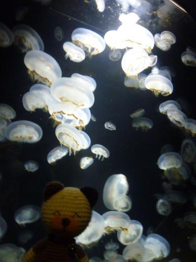 加茂水族館・クラゲ