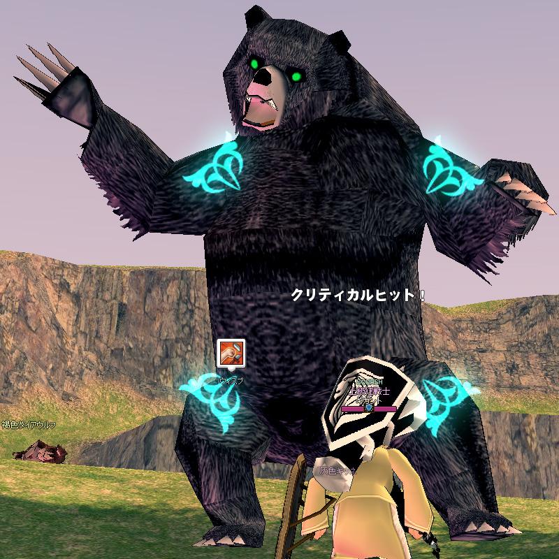 千年物の黒熊1