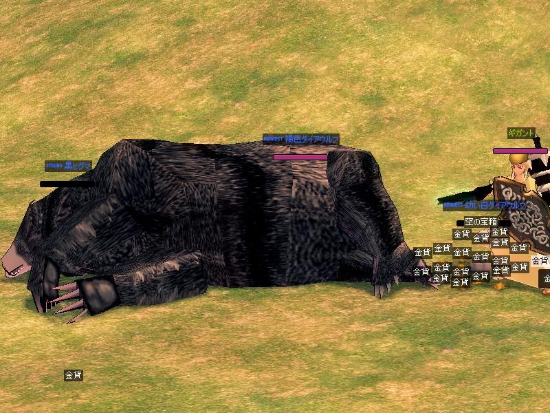千年物の黒熊2