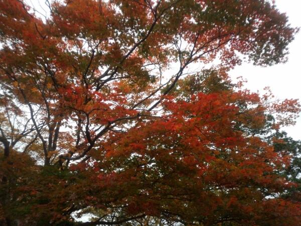 fc2_2014-10-23_20-31-39-937.jpg
