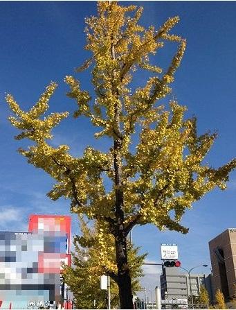 紅葉する胃腸の木
