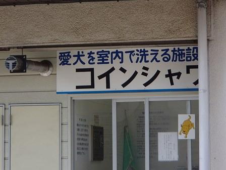 P5040110.jpg