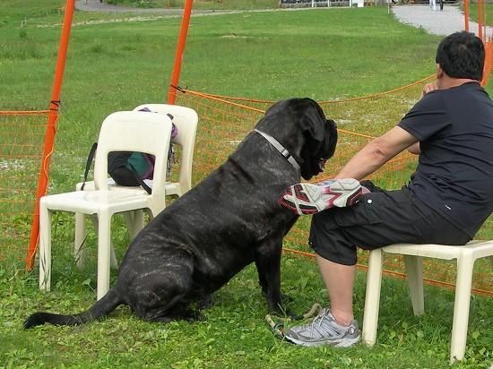 dog2006 038