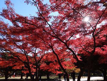 紅葉の代々木公園1