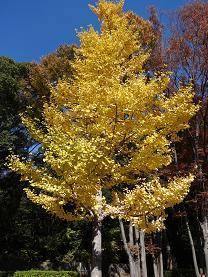 紅葉の代々木公園3