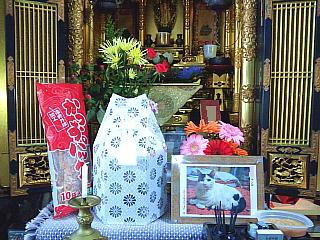130430_0979ニャンコの忌明けの仏壇