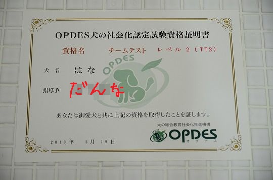 DSC_1076_20130606110403.jpg