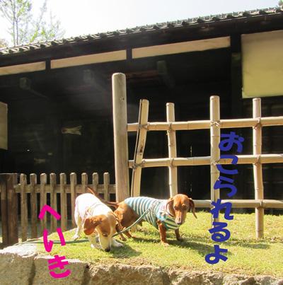 iwatuki1.jpg