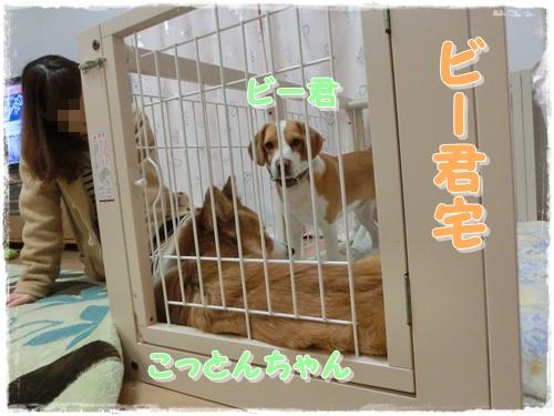 CIMG0250.jpg