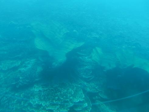 13 珊瑚