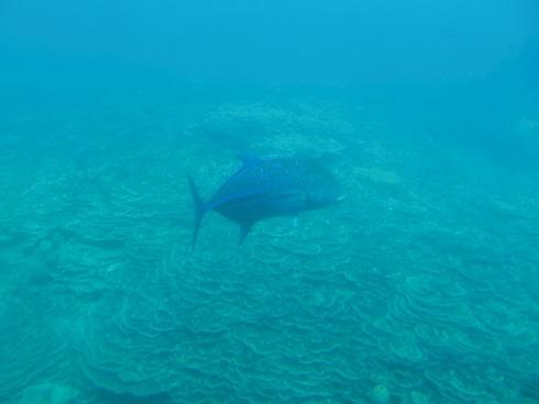 14 熱帯魚と珊瑚