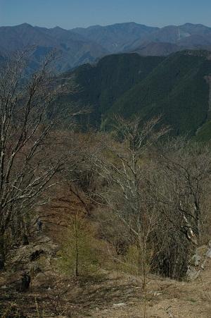 川苔山からの眺め