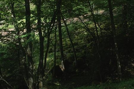 桜台~夏沢鉱泉への登山道