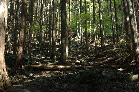 杉林のキツイ登り