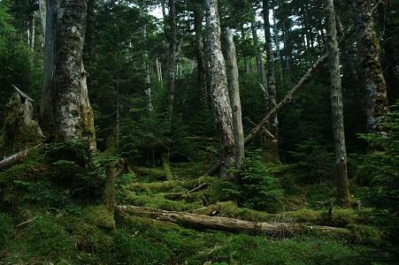 登山道の緑