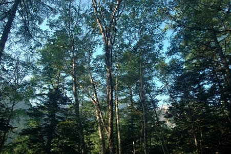 朝日のあたる木立