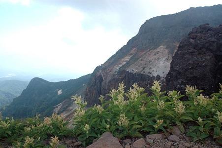 高山植物と爆裂火口壁