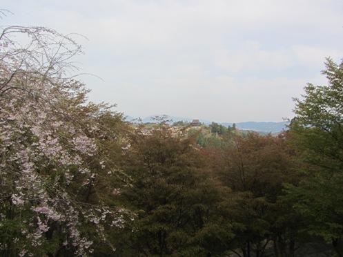 IMG_3789yoshinosakura-04.jpg