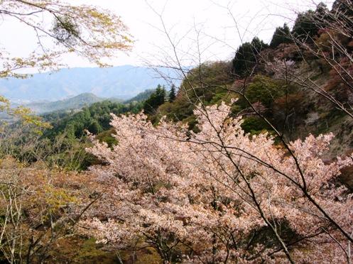 IMG_3804yoshinoflowersetc-05.jpg