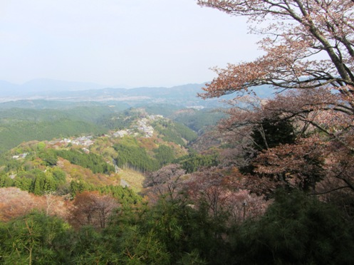 IMG_3827yoshinosakura-09.jpg