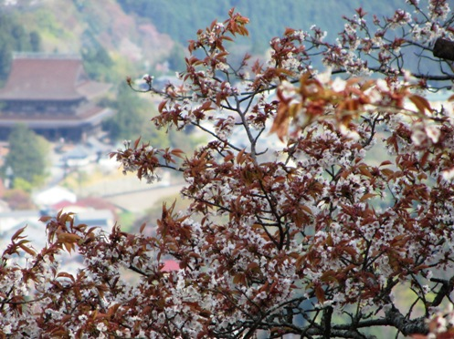 IMG_3830yoshinoflowersetc-09.jpg