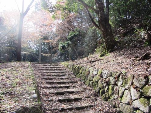 IMG_3864yoshinosakura-10.jpg