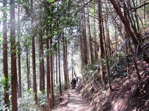 IMG_3889yoshinosakura-12.jpg