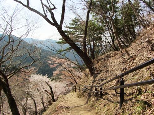 IMG_3892yoshinosakura-13.jpg