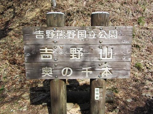 IMG_3897yoshinosakura-16.jpg
