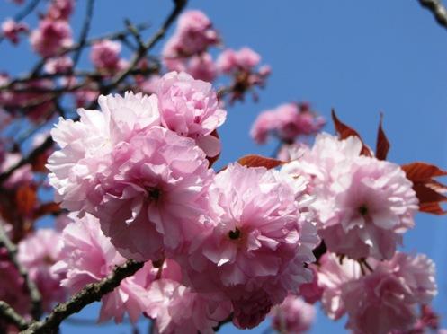 IMG_3957yoshinoflowersetc-13.jpg