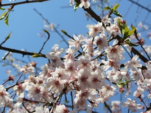 IMG_3979yoshinoflowersetc-17.jpg