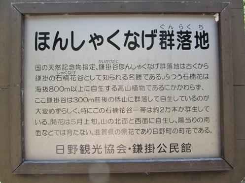 IMG_4251sigahonshakunagegunraku-04.jpg