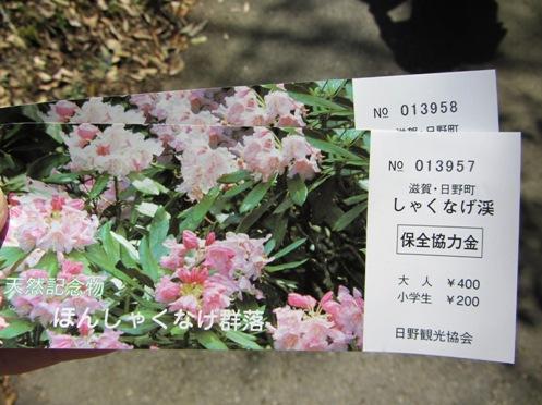 IMG_4252sigahonshakunagegunraku-05.jpg