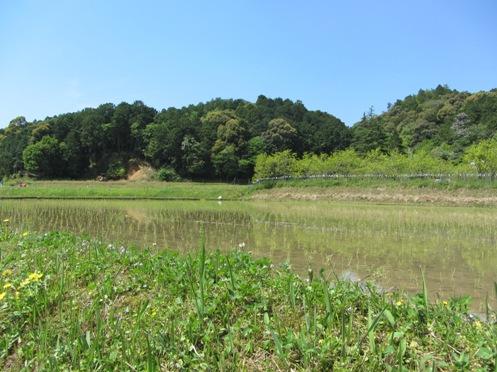 IMG_5469byakugoujisonohoka-02.jpg