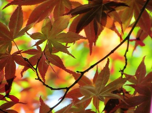 IMG_5589byakugoujisonohoka-13.jpg