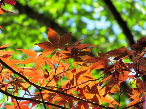 IMG_5591byakugoujisonohoka-14.jpg
